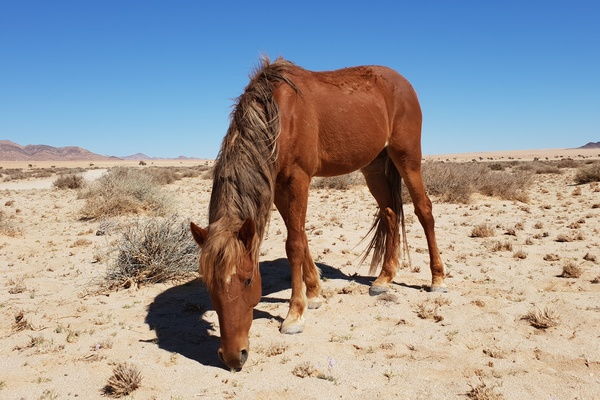 Wild Horses Of Namibia | Attractions in Namibia | Destination Namibia